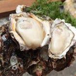 ぷりぷり!海のミルク牡蠣は絶品です