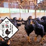 竹鶏一黒軍鶏【宮城県白石市】