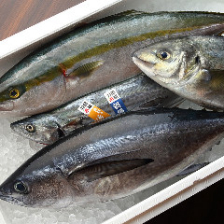 羽田市場から仕入れる朝獲れ鮮魚