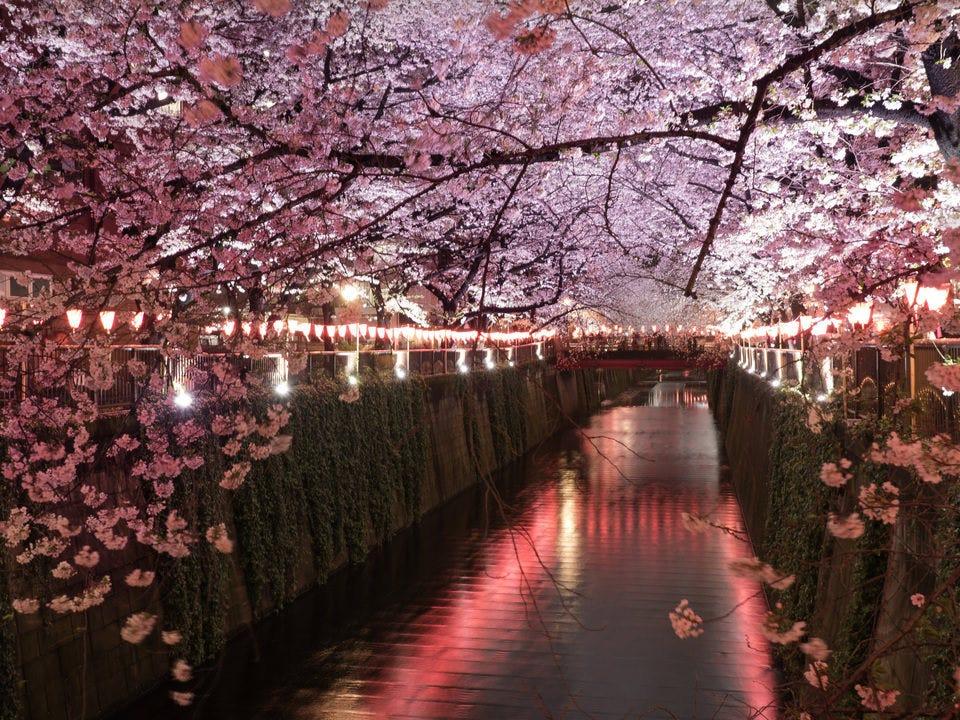 目黒川のお花見に立ち寄った際は、是非ご来店お待ちしております