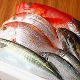 豊洲市場直送、新鮮魚介