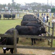 近江牛を一頭買い