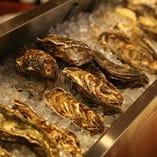 カウンター前にはその日入荷した国産の新鮮な牡蠣が並びます。