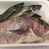 市場直送鮮魚!