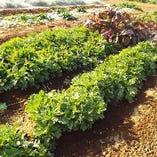 契約農家・・・野菜作りからこだわり、いつも7、8種類の野菜を栽培しています。