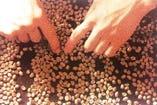 【生豆の質と焙煎にこだわる】 キーフェルで使用している生豆は高品質なアラビア種の生豆だけ。こだわりのおいしさを求めて、生豆と焙煎に余念がありません。
