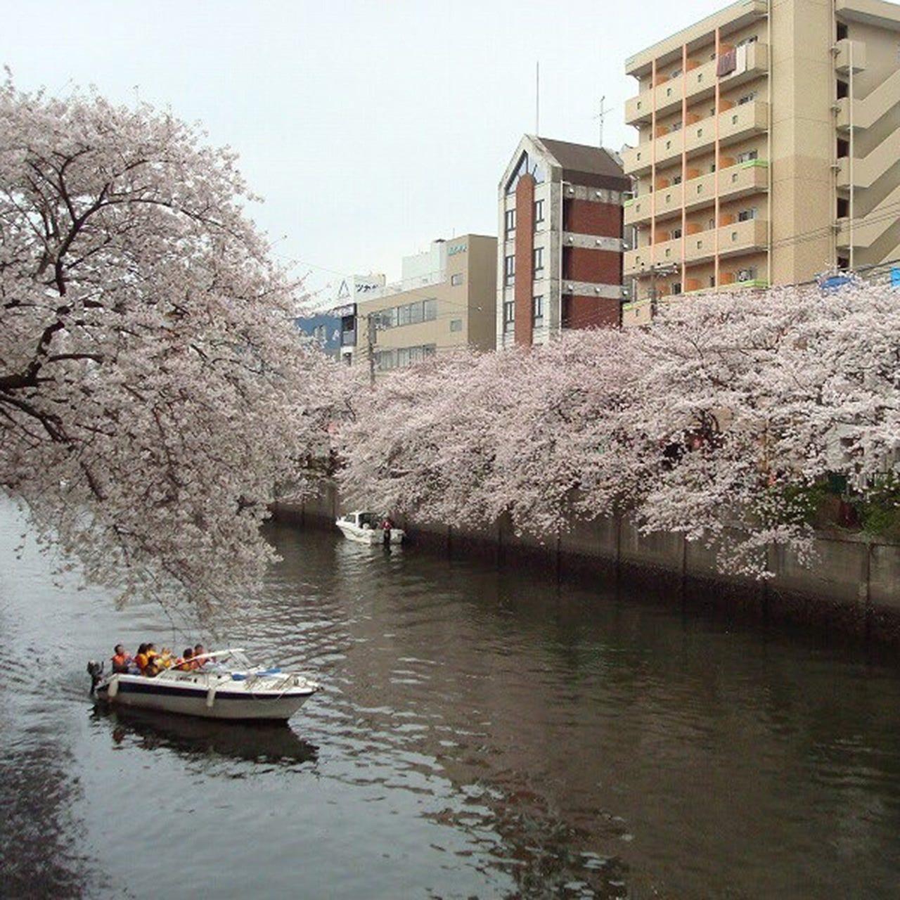 桜、川の音、風…季節を楽しむテラス