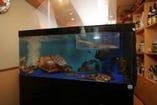 活きのいい魚が 店内のいけすを泳いでいます