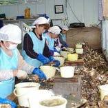 宮城から直送される新鮮な牡蠣【宮城県】