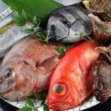 美味しいお魚がいっぱい。
