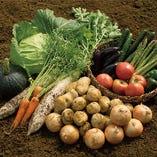千葉県産直野菜や、当社北海道ファームの新鮮野菜!
