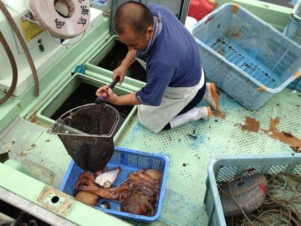 漁師さんから地魚は直接買付します。