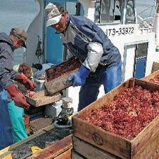岩手の漁港から産地直送で天然ホヤを