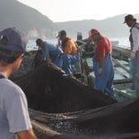 高知県宿毛湾「与力水産」の魚【高知県】