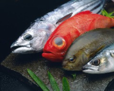 季節の魚を満喫 旬魚のコース