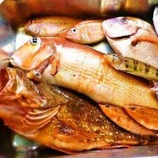 熱海湾、網代湾は魚の宝庫!
