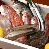 日本全国より鮮度にコダワった海鮮類、新鮮お魚!【国産】