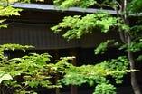 木々の間から木漏れ日の差す庭園 移る時をお楽しみ下さい