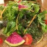 農家の生き様! 無農薬ハーブ野菜のサラダ