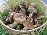 秋の味覚「丹波松茸」を贅沢に味わう。