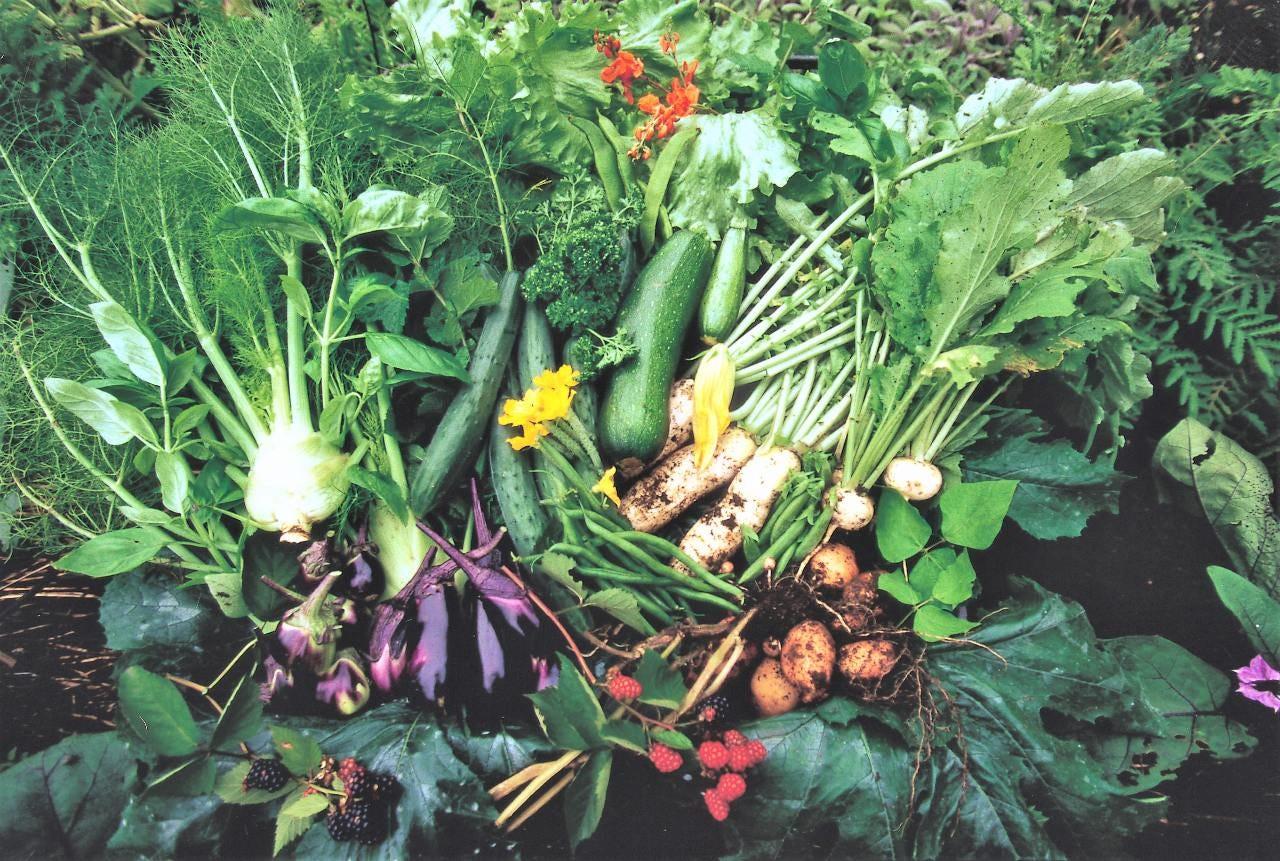 とれたての新鮮地野菜