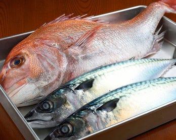 瀬戸内から仕入れる魚