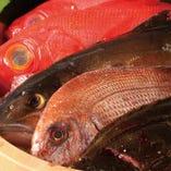 能登・鳥取漁港から直送の鮮魚や天然のインドマグロを堪能