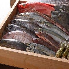 お魚Dining わんだ ~伊豆の海を喰べる~