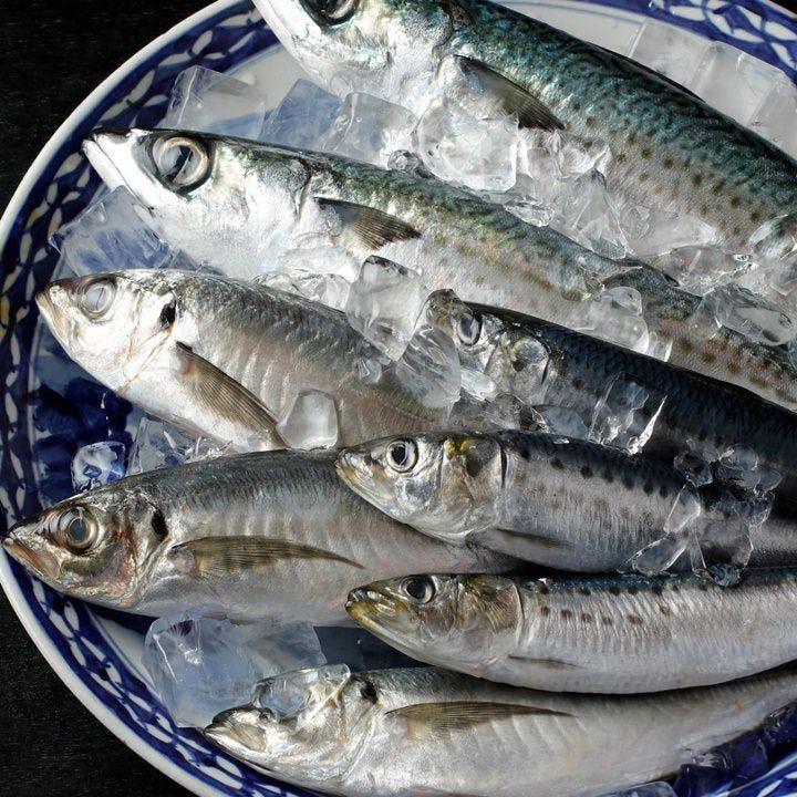 豊洲市場直送だからこその旬の鮮魚