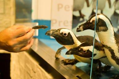 パーティーダイニング ペンギンのいるBAR 池袋店 こだわりの画像