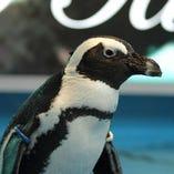 ペンギンを間近で眺めながら楽しむ癒しのBAR