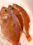 鮮魚【山口県】