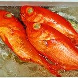 良質な海域で育つ地金目鯛まさに宝赤の輝き!