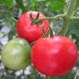 静岡ホットファームのトマト【静岡県】