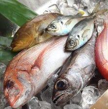 五島列島福江港から直送の魚たち