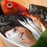 毎朝漁港から仕入れている鮮度抜群の魚介を自信持ってご提供します