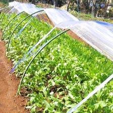自家農家栽培の新鮮野菜の数々