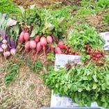 地元産の野菜を使用