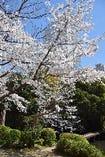 四季を映し出す庭園は140年以上の歴史を語りかけてきます