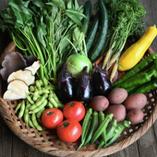 朝採り新鮮野菜【千葉県】