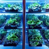 ◆専用野菜保冷室 オーダーメイドの専用野菜庫で鮮度を守ります
