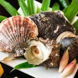 平塚港の新鮮な魚介類【神奈川県平塚市】