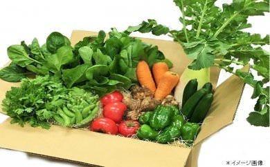 高知県四万十産 四万十野菜