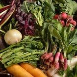 2月21日の野菜【千葉県】