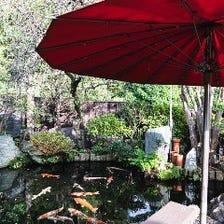 鯉が泳ぐ風情ある庭園を臨む