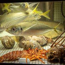 店内水槽には 元気な活魚たち♪