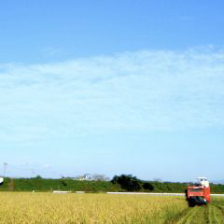 「有機栽培のお米」