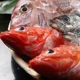 極上鮮魚の寿司を堪能