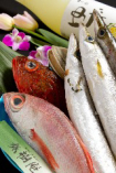 本日のお魚(一尾)