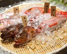 漁港直送!最高鮮度のお魚です!